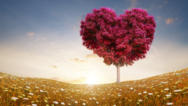 love_heart_tree_fields-3840x2160